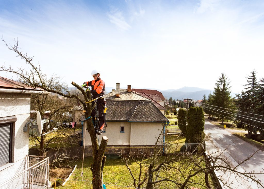 Tree Removal & Tree Cutting Company in Chester County, PA
